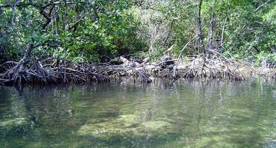 Paz, tranquilidad, pesca y manglares en Río Cocolí