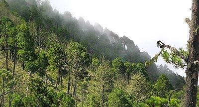 Ascenso al volcán Acatenango
