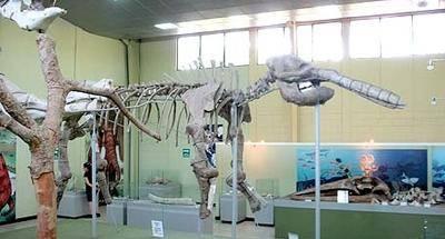 Museo de Paleontología y arqueología Roberto Woolfolk Saravia: entre mastodontes y megaterios